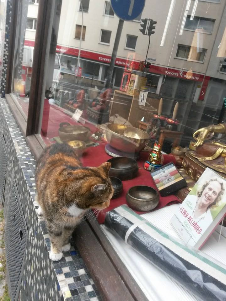 Katze auf Lesespaziergang